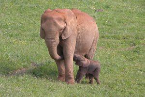 Elefantes del Parque de la Naturaleza de Carbáceno